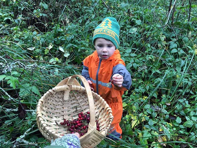 Hawthorn berries for tea