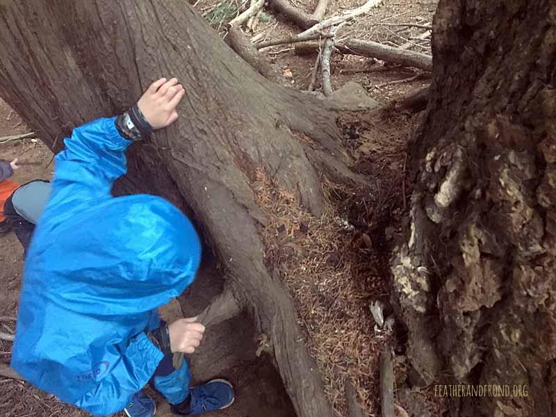 A raccoon latrine at the base of the tree..