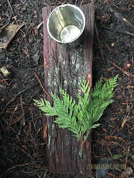 Cedar tea is yummy!