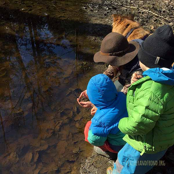Looking for amphibian eggs...