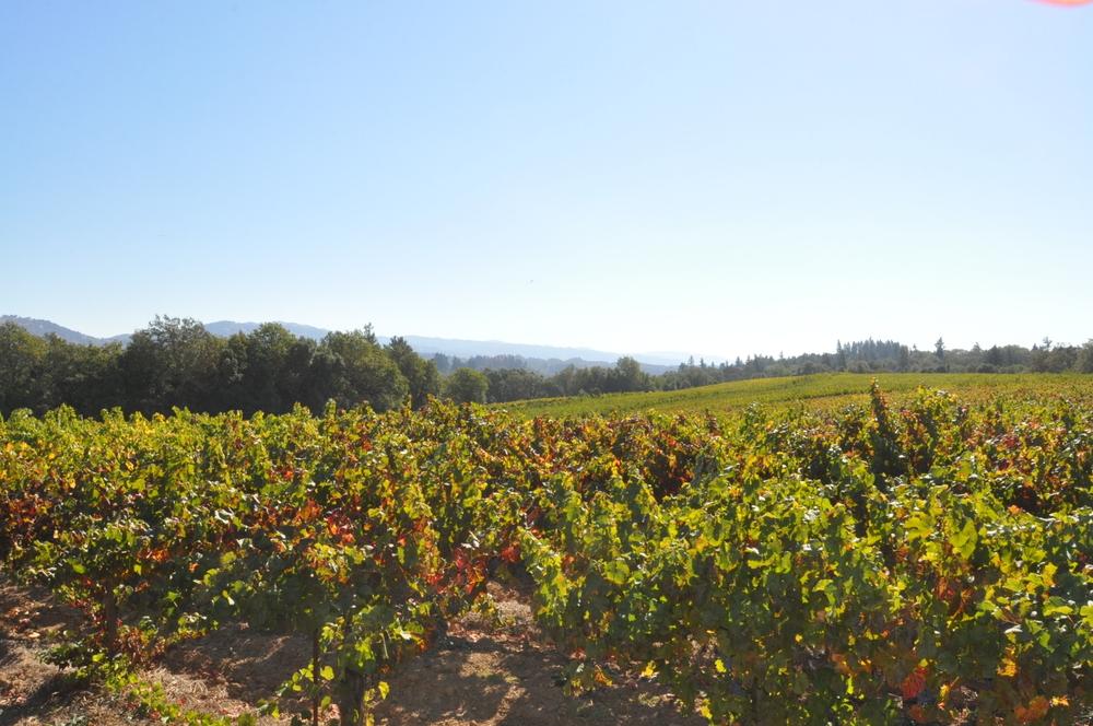 Rolling-Vineyard.JPG