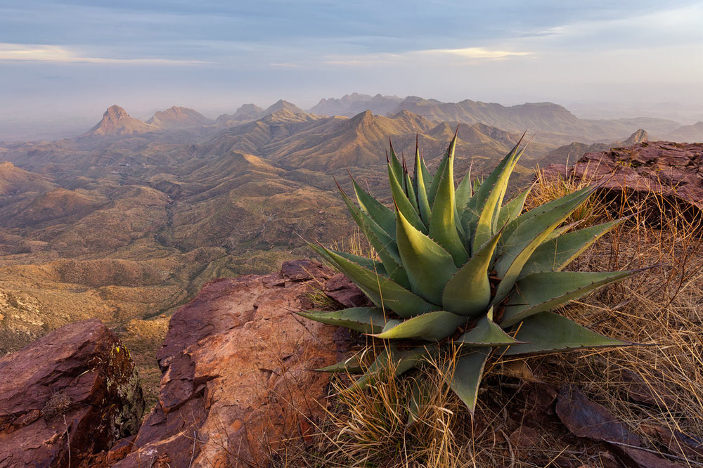 Big-Bend-National-Park-ABP-South-Rim_agave.jpg