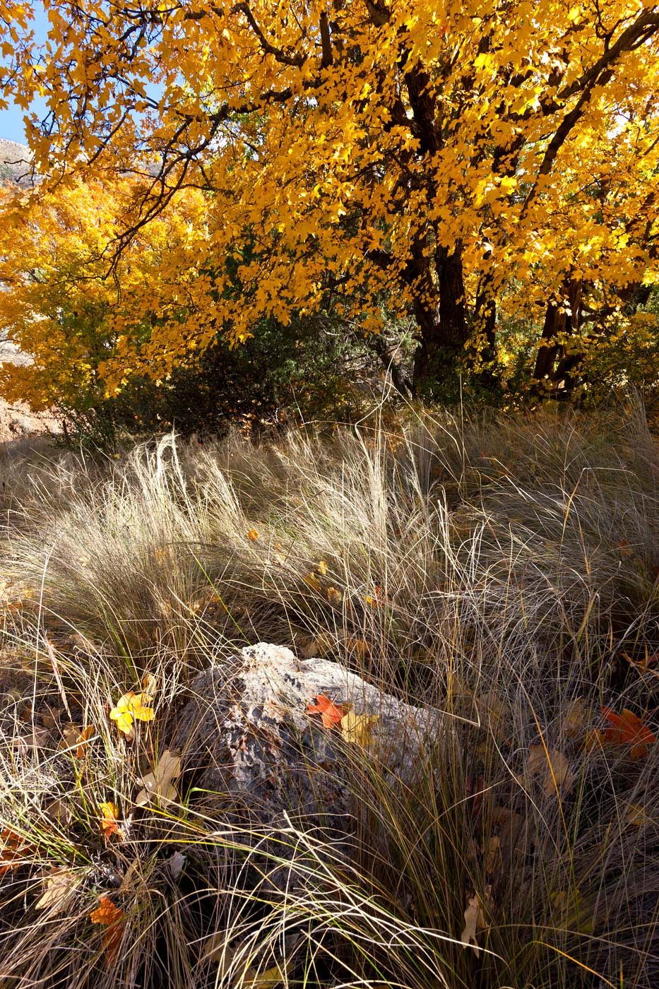 Guadalupe-Mountains-National-Park-ABP-Fall-Colors_Dog-Canyon.jpg