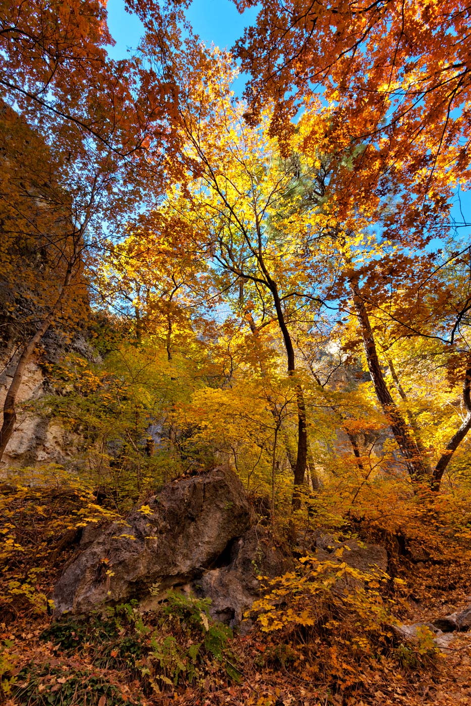 Guadalupe-Mountains-National-Park-ABP-McKittrick-Canyon_Fall-Colors-maples.jpg