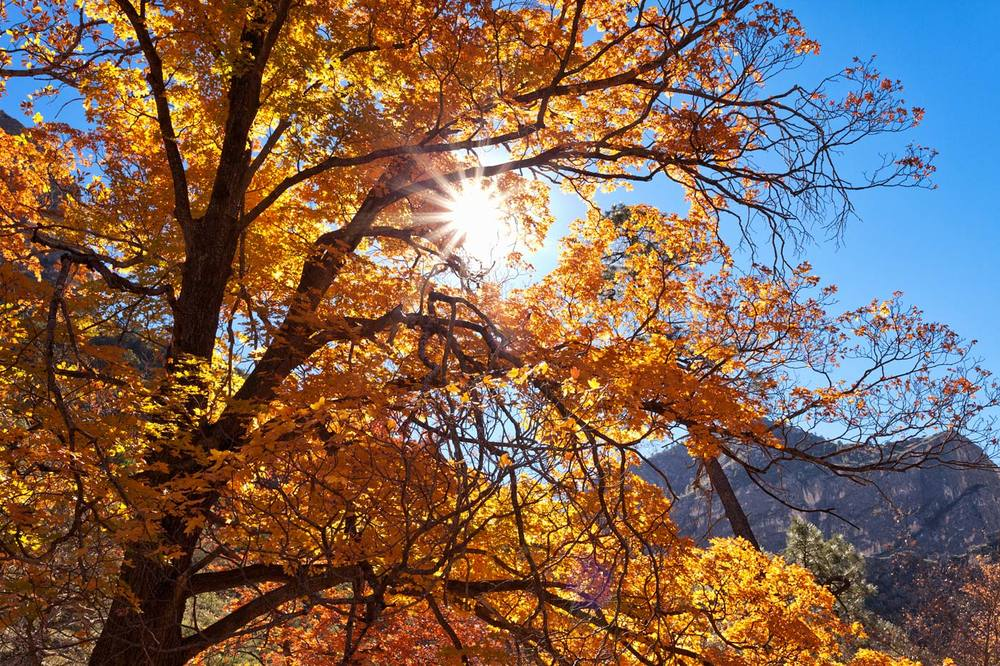 Guadalupe-Mountains-National-Park-ABP-McKittrick-Canyon_Fall-Colors-sun.jpg