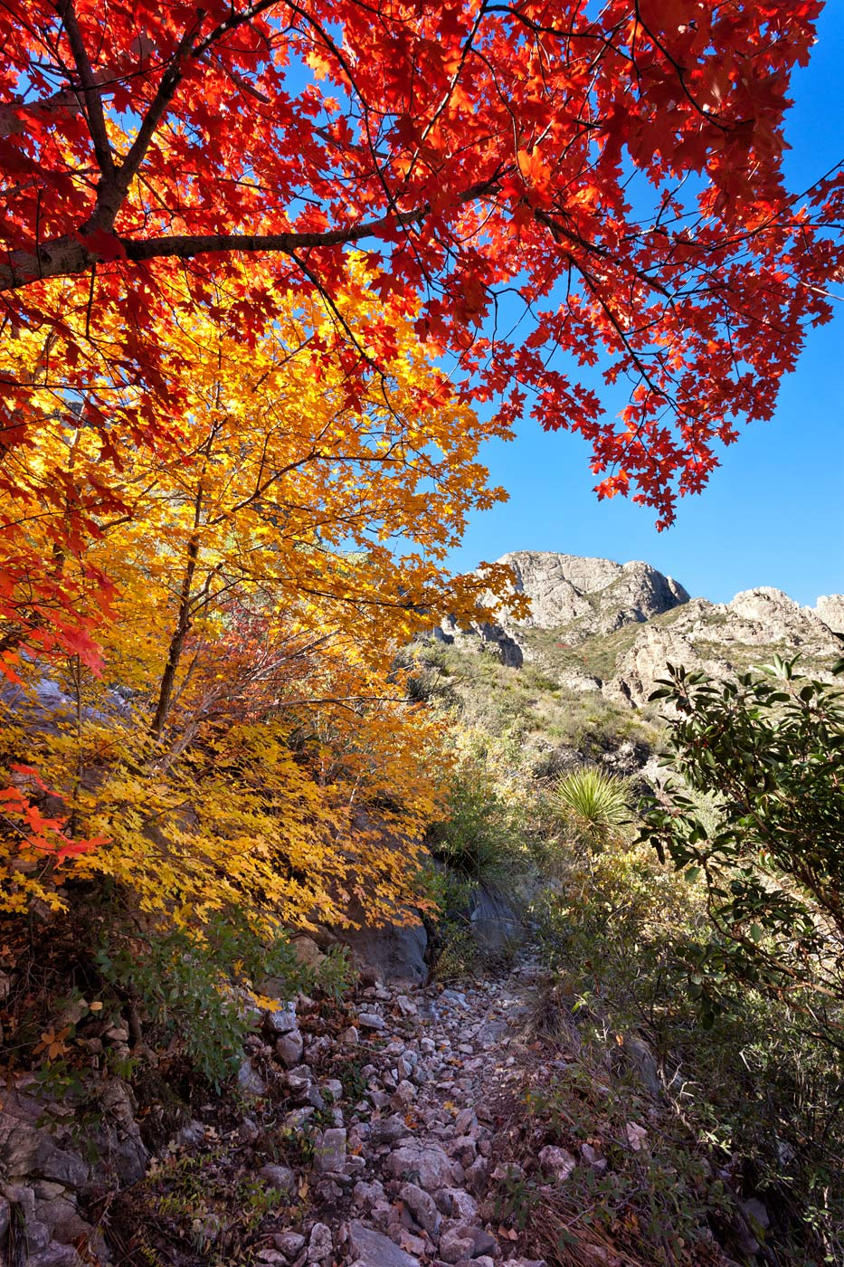 Guadalupe-Mountains-National-Park-ABP-McKittrick-Canyon_Fall-Colors-trail.jpg