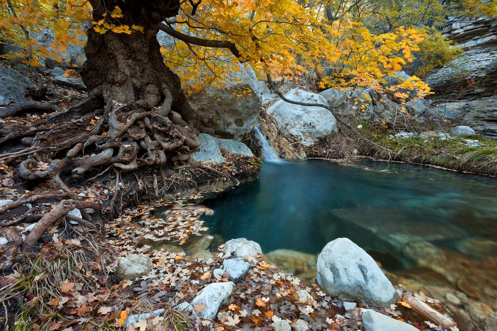 Guadalupe-Mountains-National-Park-ABP-Smith-Spring-fall-colors.jpg