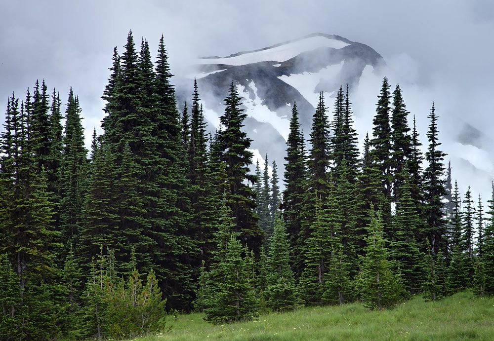 Mount-Rainier-National-Park-ABP-Goat-Island-Mountain.jpg