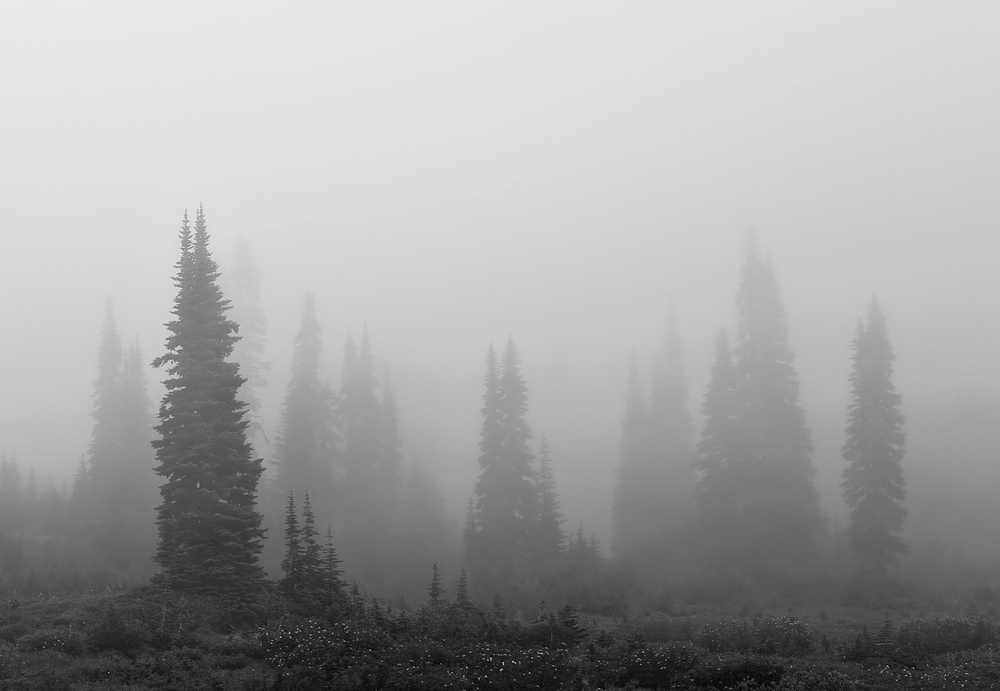 Mount-Rainier-National-Park-ABP-Mountain-Hemlock_Mist.jpg