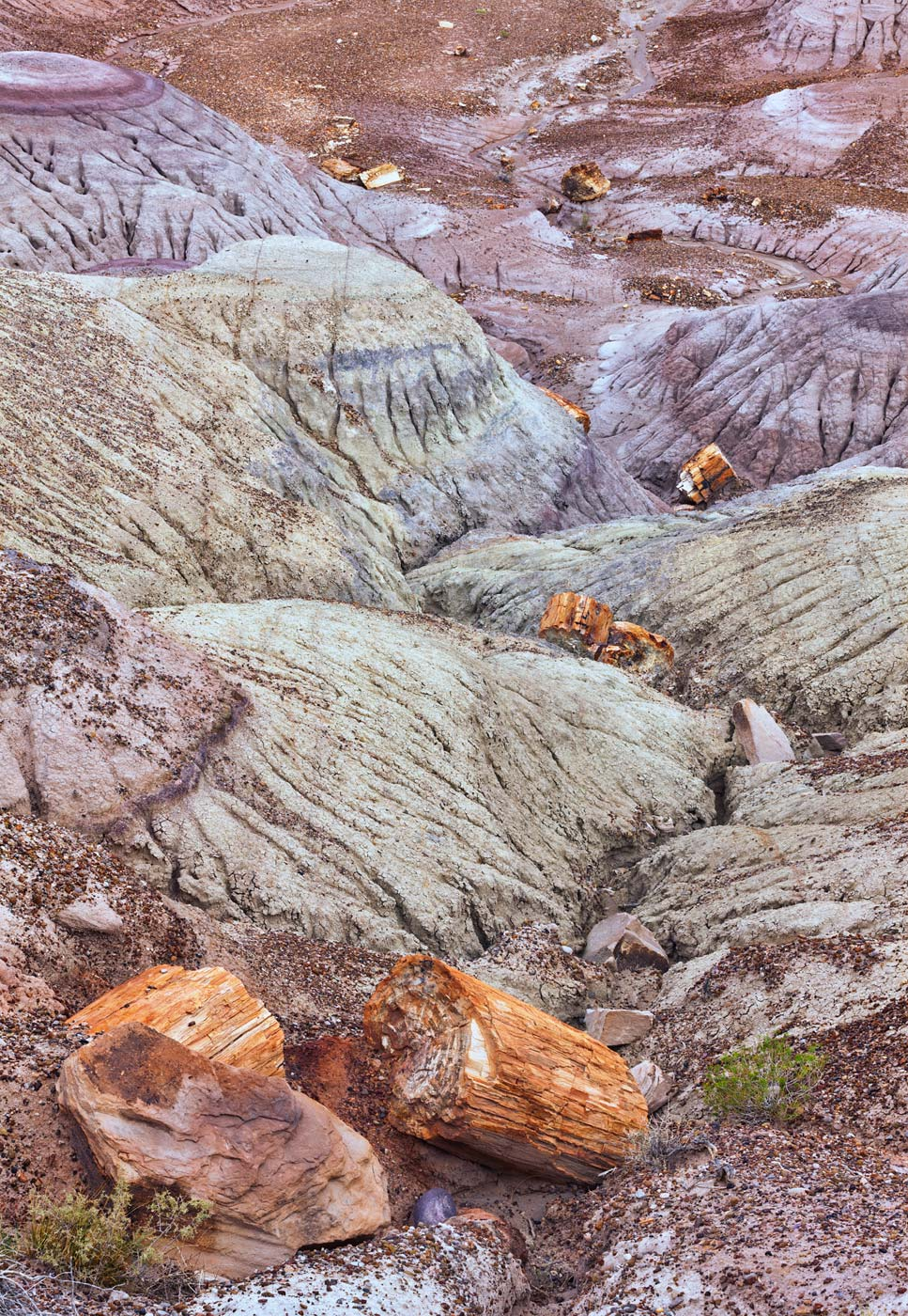 Petrified-Forest-National-Park-ABP-Blue-Mesa2.jpg