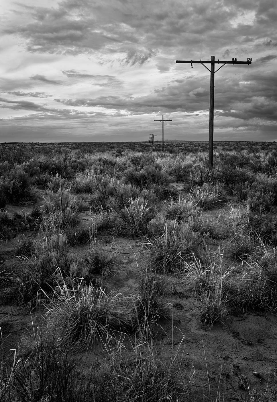 Petrified-Forest-National-Park-ABP-Route66_black-and-white.jpg