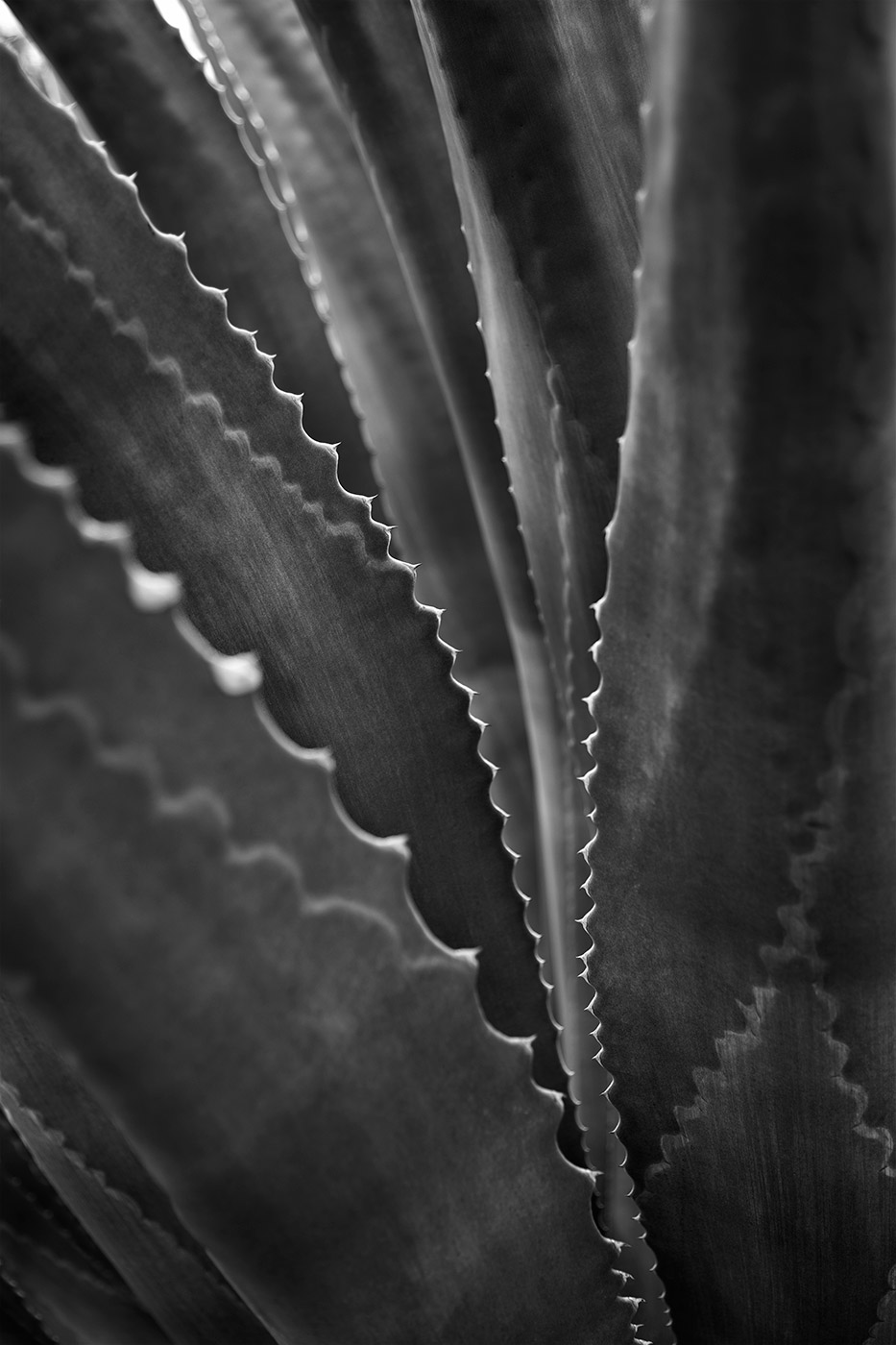West-Texas-ABP-Agave.jpg