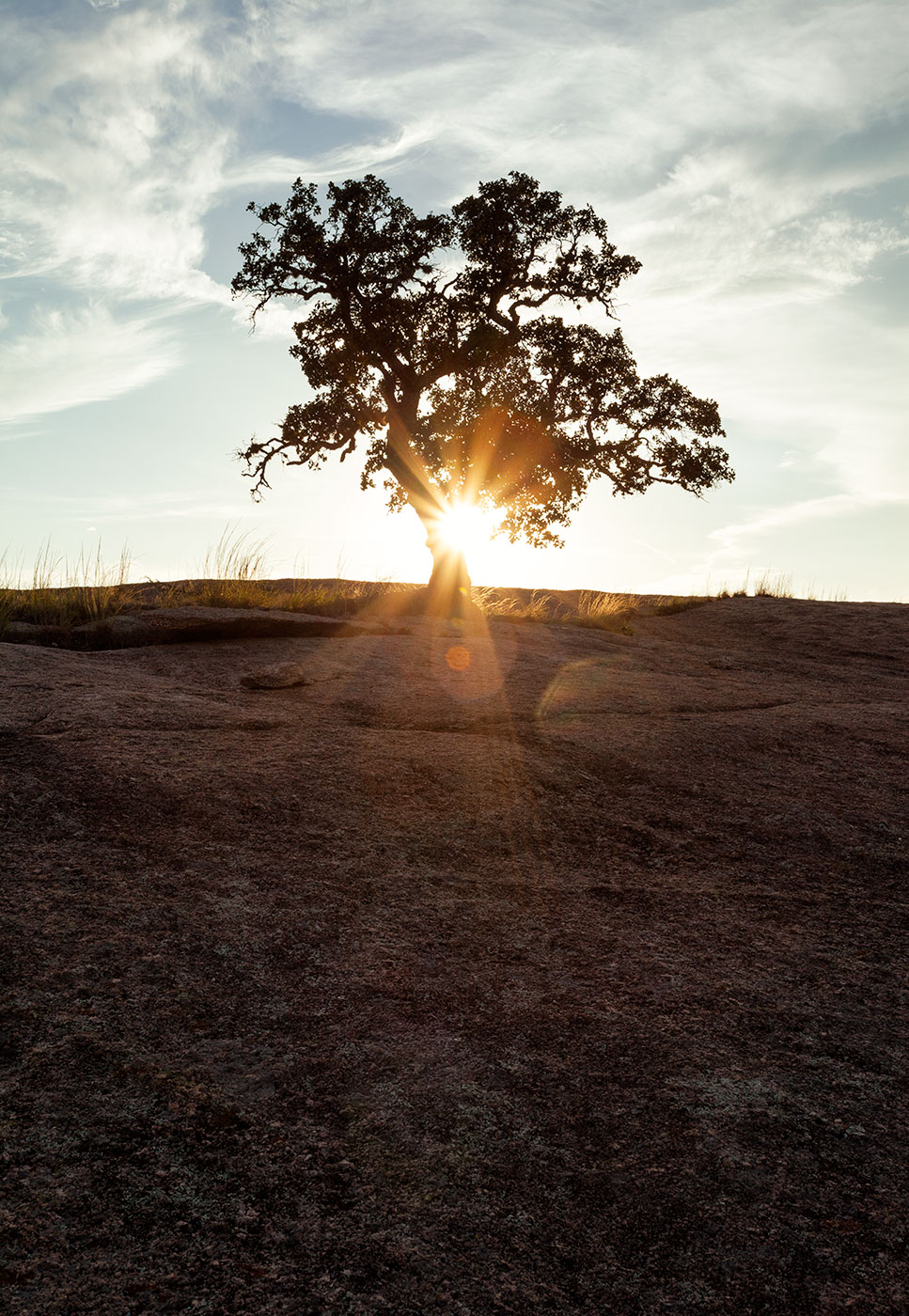 Enchanted-Rock-ABP-Tree_Little-Rock.jpg