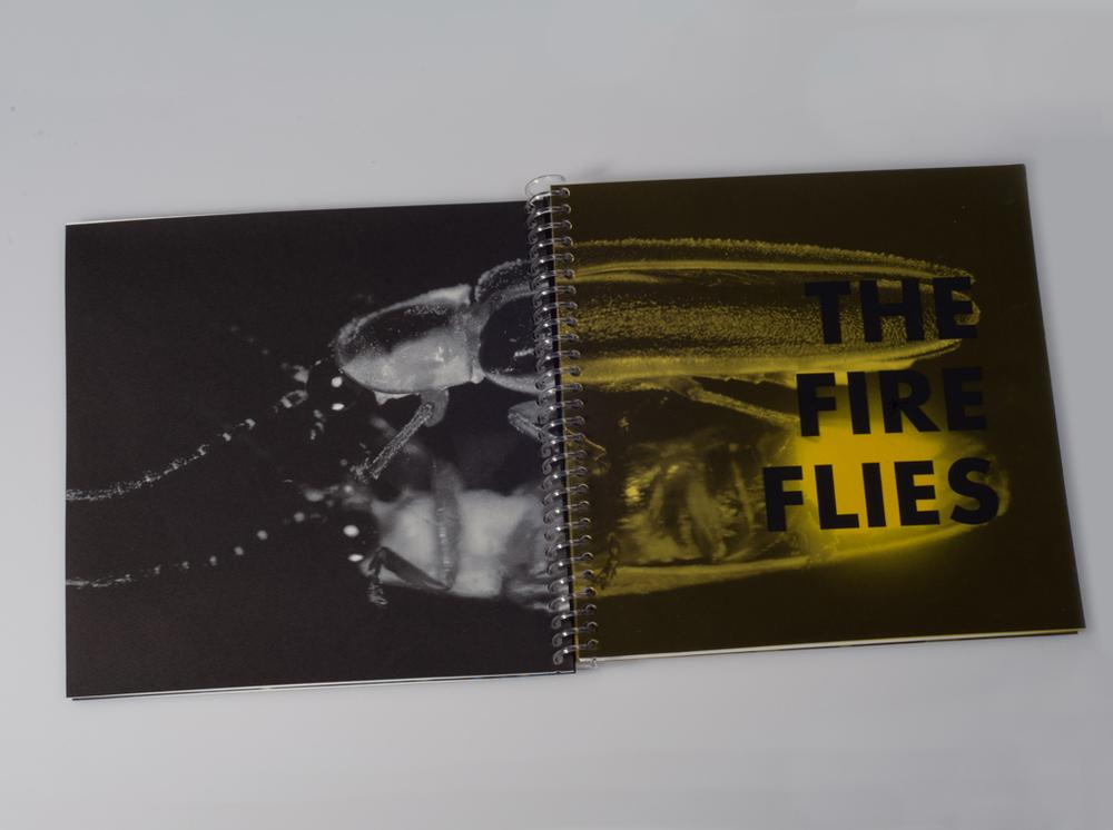 firefly15.jpg