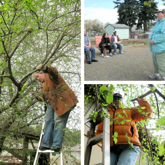 Left & Lower Right: Village Gardens gardeners participating in orchard pruning trainings. Top Right: Community led planning meeting at Village Gardens.