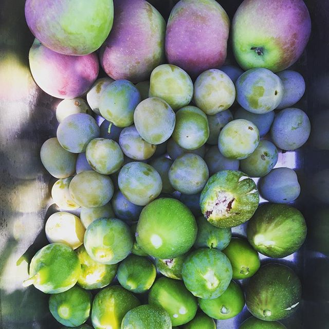 fig plum party.jpg