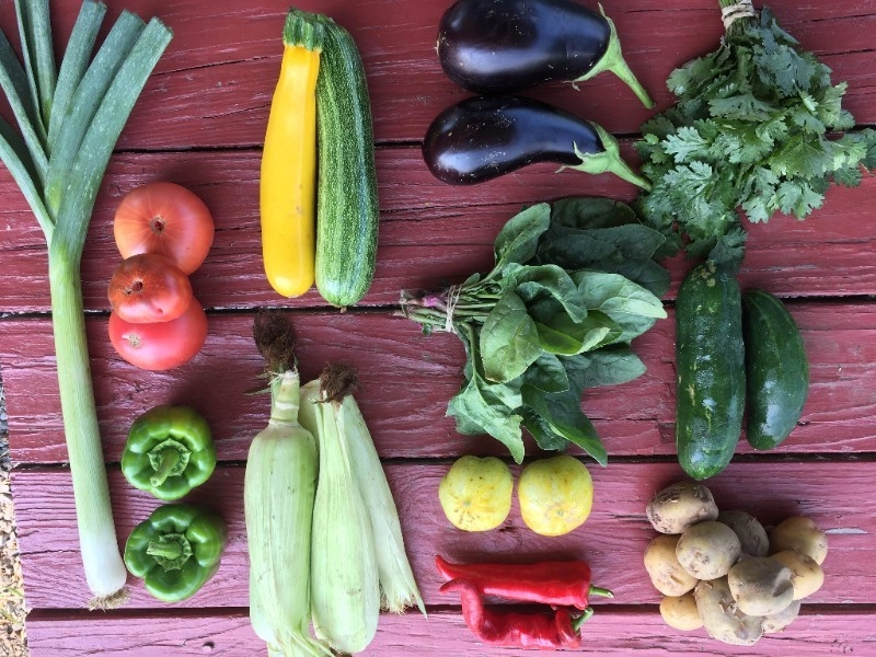 August - Basil, Chives, ParsleyCarrots, BeetsCorn, EggplantOnions- sweet Walla WallasPeppers- Sweet roasting, bell, jalepenoTomatoes- heirloom & romasZucchini- green & yellow