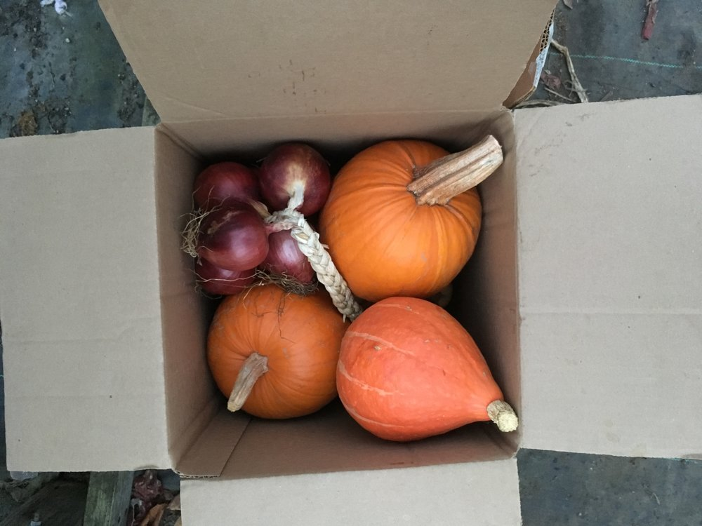 Opt-in to our        Fall Bounty Box! - Beets, Carrots, Watermelon radishesCabbage- green, red, & NapaCauliflower, broccoliOnions- leeks, red storage onionsPeppers- hot speciatlyPotatoes- Yukon gold, Purple Majesty, & German ButterballWinter squash- delicata, butternut, red kuri, kabocha, acorn, and morePumpkins- Pie pumpkins & carving pumpkinsThyme, Rosemary, Sage, Oregano for drying