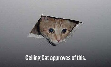 ceiling cat aprove