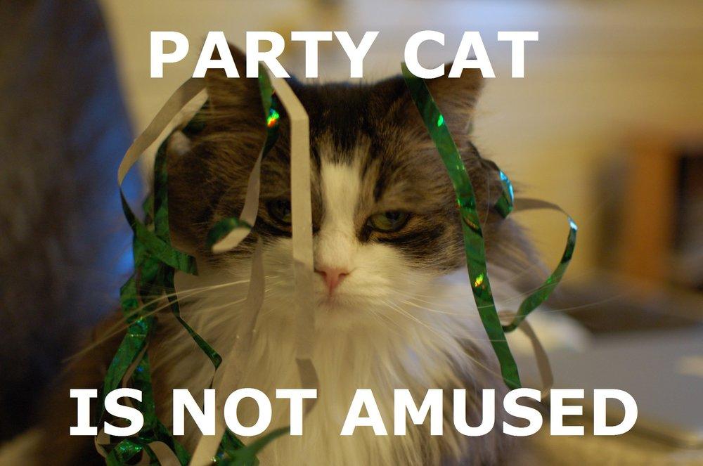 party-cat.jpg