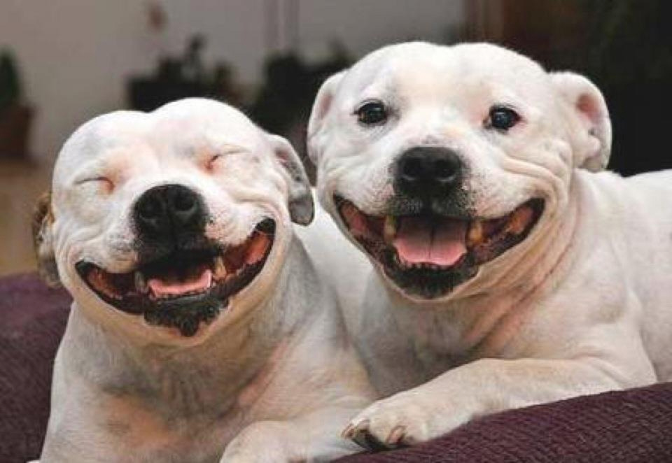 Happy Dogs