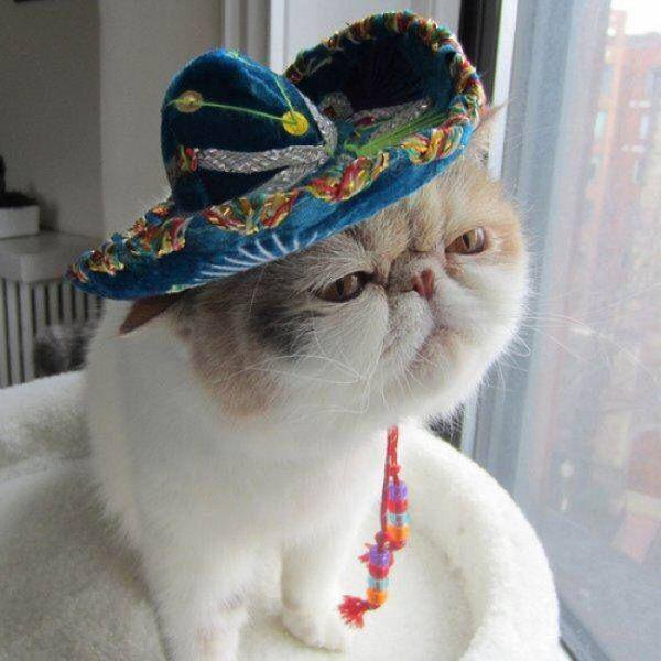cat window mexican hat