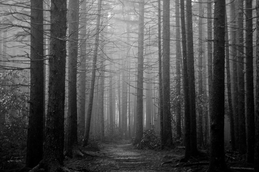 Fog in the Forest (Gaudineer) - West Virginia