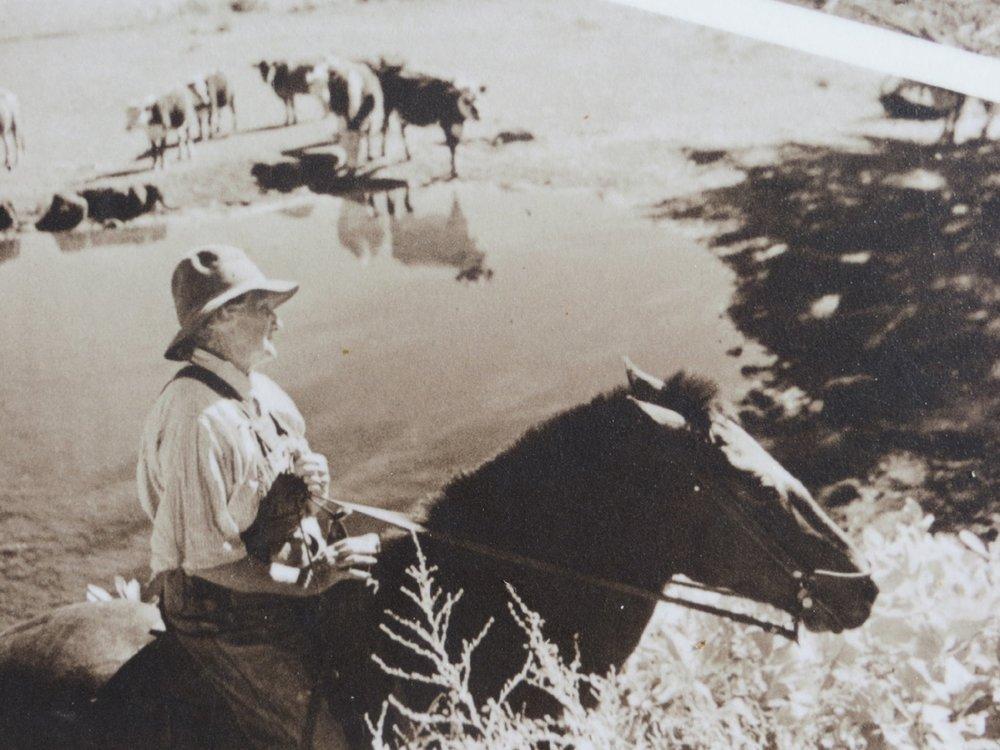 Josie cattle hearding.jpg