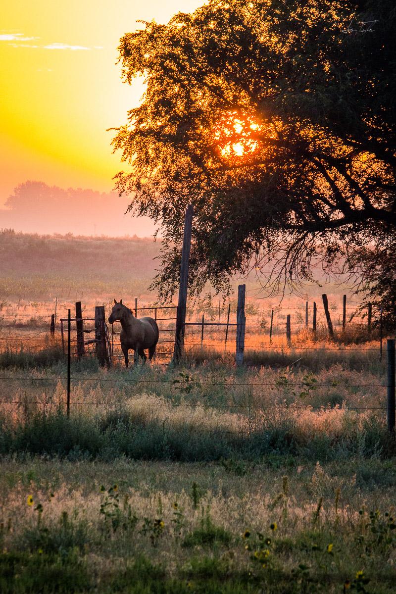 Sunrise on the Farm - Wyoming
