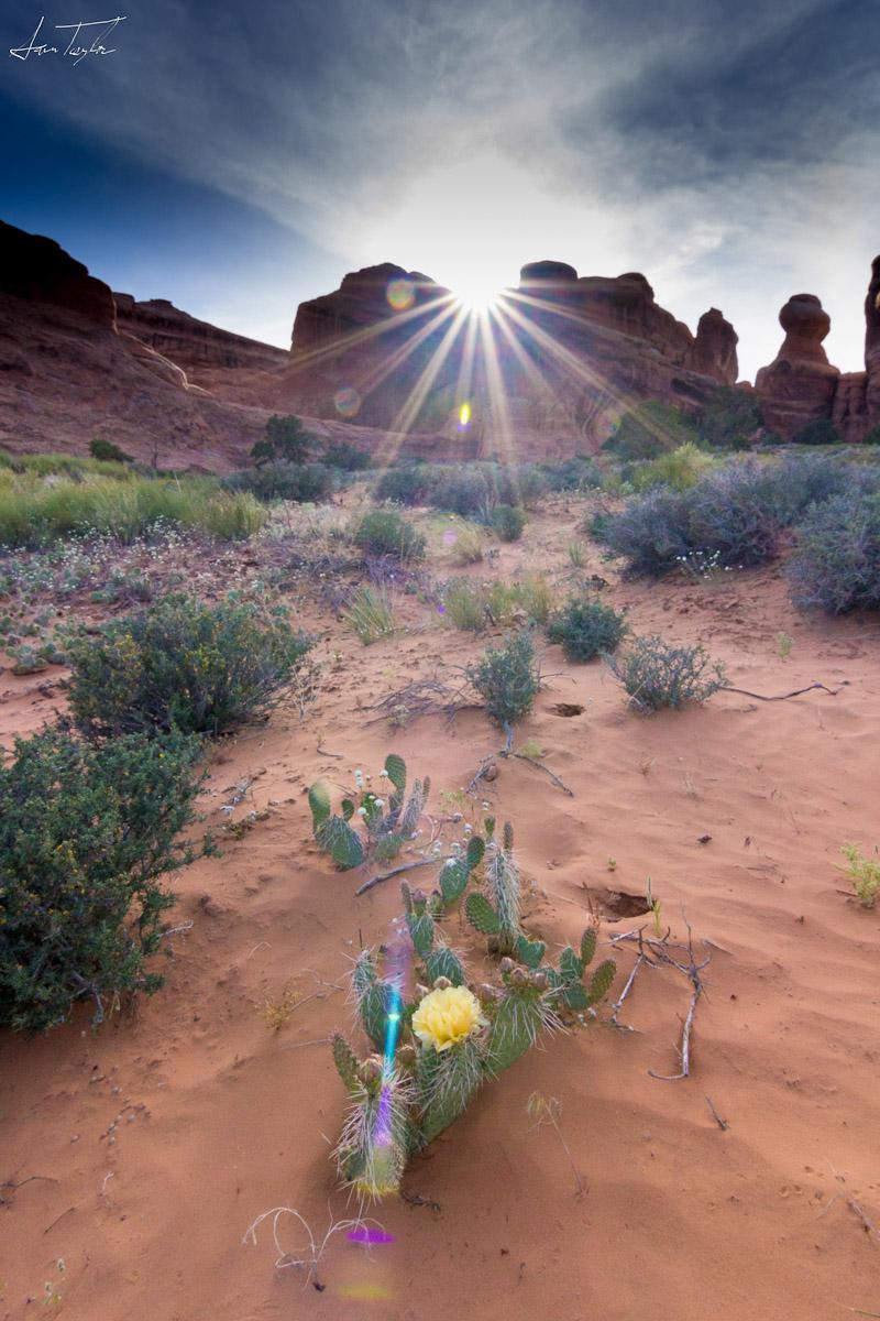 Flare - Utah