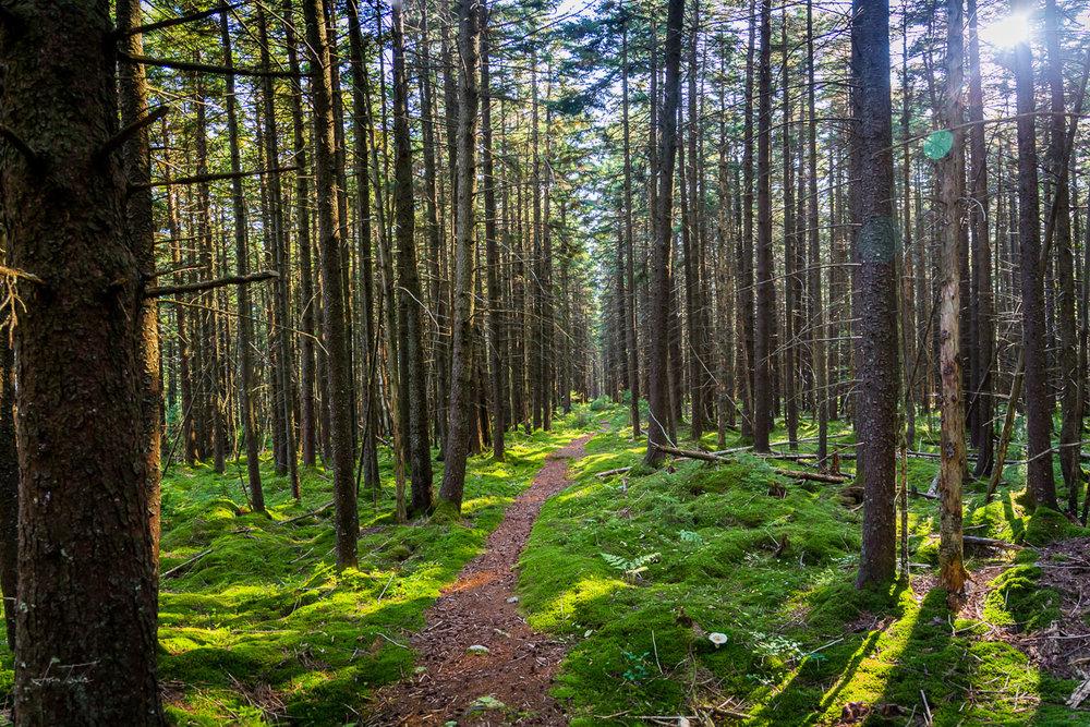 Cranberry Wilderness Solitude - West Virginia