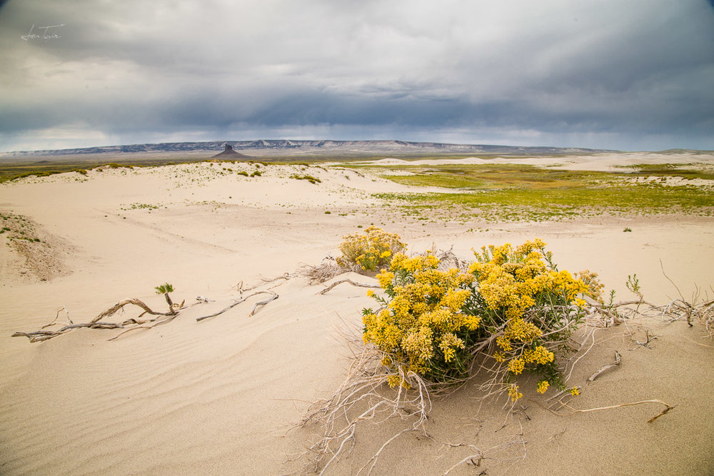 Rabbitbrush and Storm, Killpecker Dunes - Wyoming