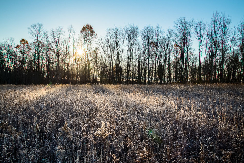 Field Frost - West Virginia