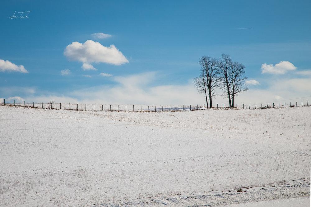 Winter Field Trees - West Virginia