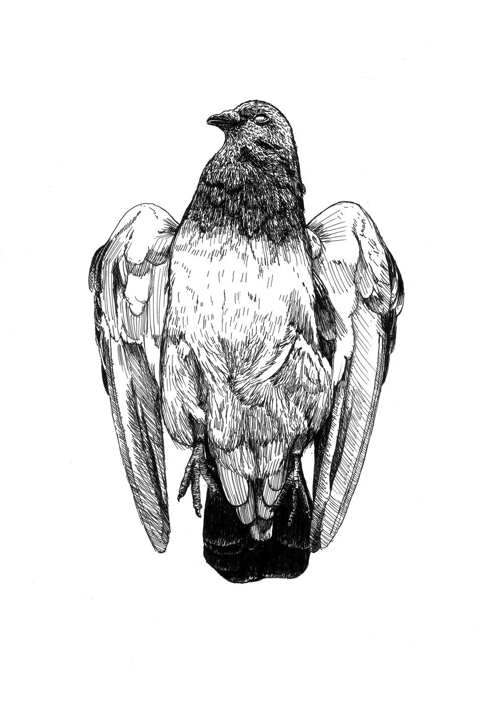 pigeon_scan_A4.jpg