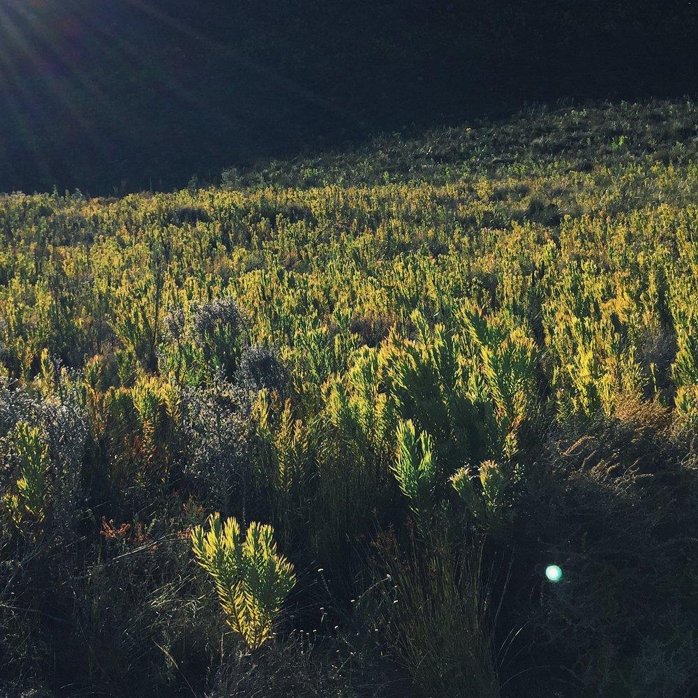 Kolkol - Botrivier, Overberg, Western Cape