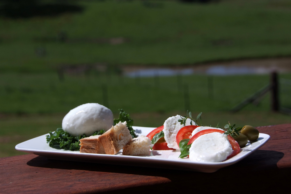 Our signature Buffalo Mozzarella