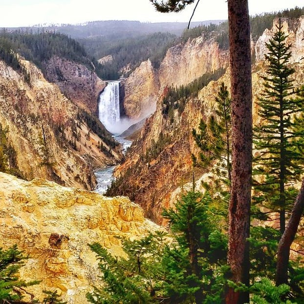 #Yellowstone Artist Point in the #grandcanyon of YS!  #naturelovers #adventuretime  #adventure #californiaadventure #travelphoto #trees #waterfalls #StreamerNetwork #RoadToAffiliate #twitch #yellowstonenationalpark