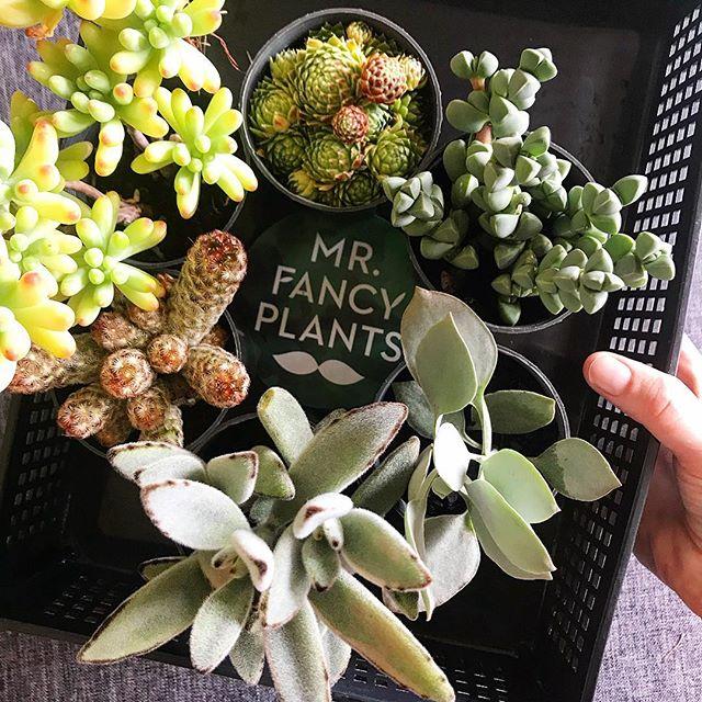 Spot the cactus. 👀🌵 . . . #mrfancyplants #succulents #succulentlover #cactus #locallygrown #texture #succulent #plantlife #plantlove #houseplants #garden #happyplants #planttherapy #plantlover #melbourne #succulentclub #plants #botanicalpickmeup