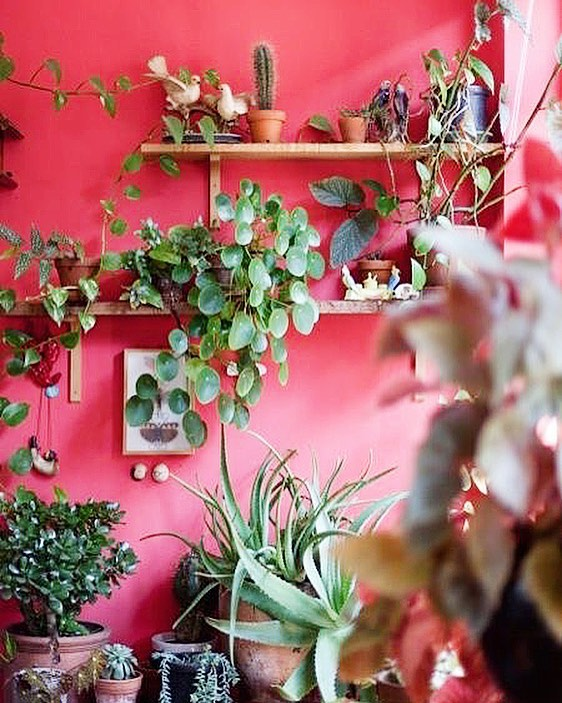 Sunday greenery inspo. 🌿✨ If we were naming this colour palette, a few options spring to mind ~  1. Green Valentine  2. Jungle Sunset 3. Watermelon Any other suggestions? 📷 via homedecorex.com . . . #myfancyplant #mrfancyplants #interiorrewilding #plants #plantlife #plantgang #shelfie #greenery #houseplants #houseplantclub #indoorplants #indoorgreen #homeinspo #plantvibes #succulents #cactus