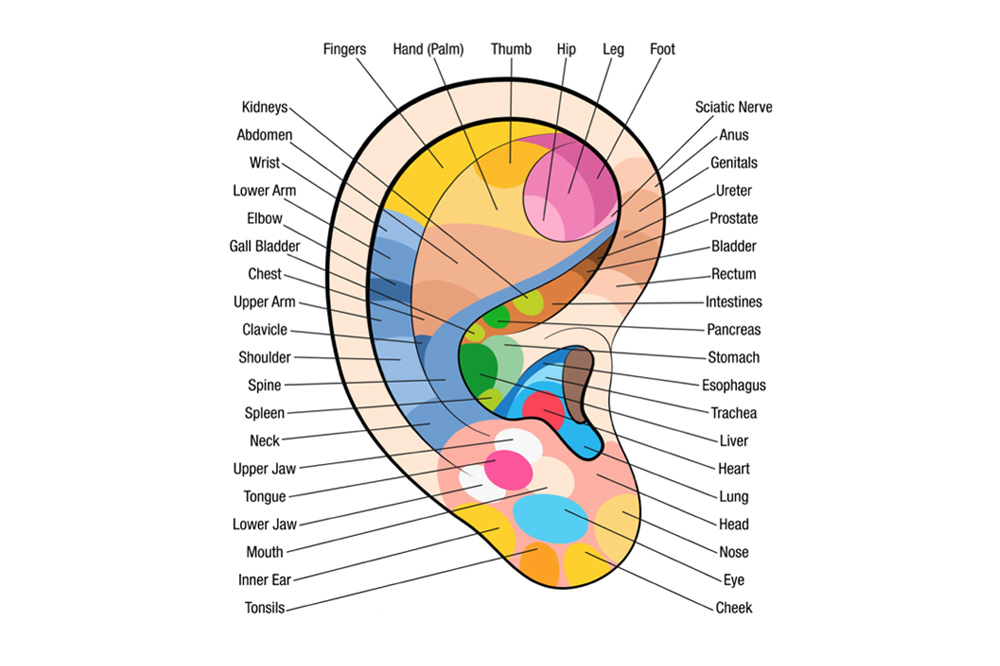 reflexology_chart_ear.jpg