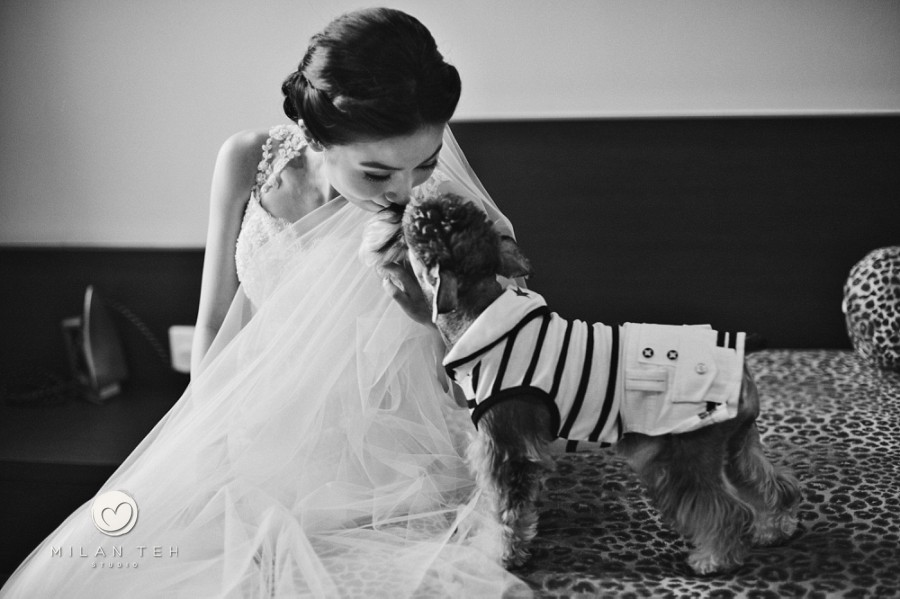 penang wedding photography bride with dog
