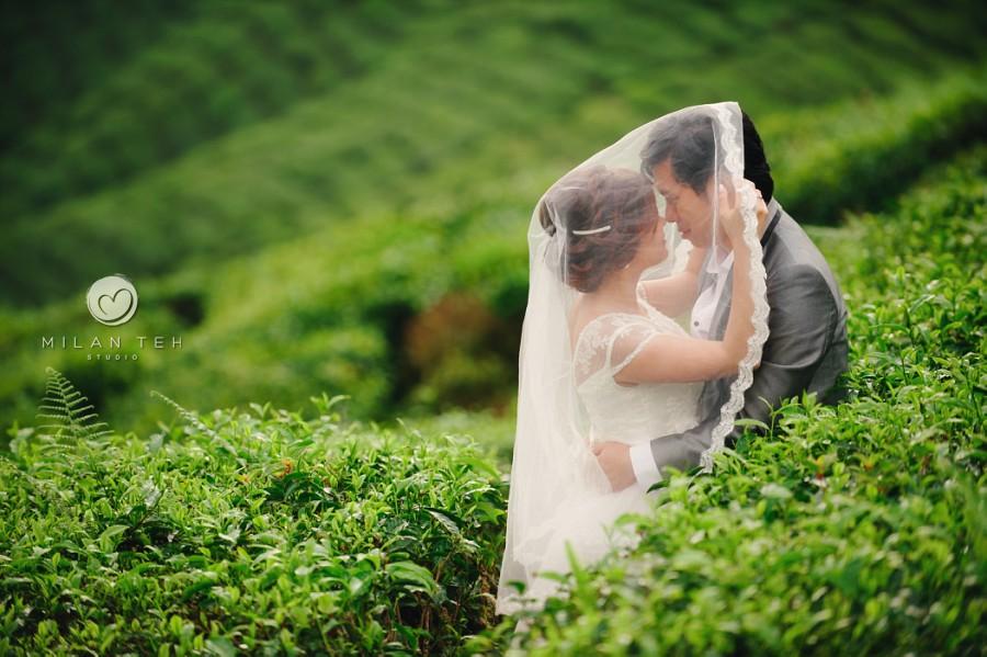 cameron highlands prewedding photography