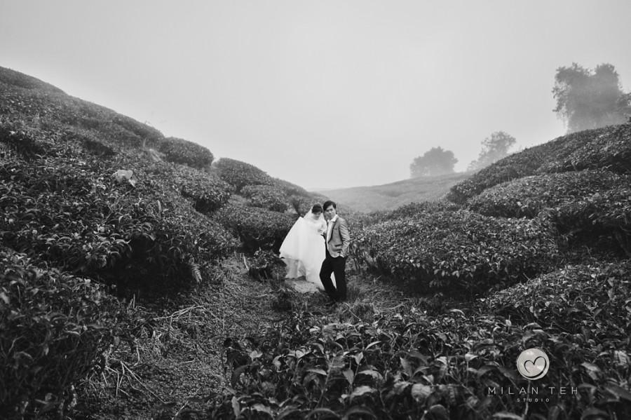 prewedding photo at cameron highlands tea plantation