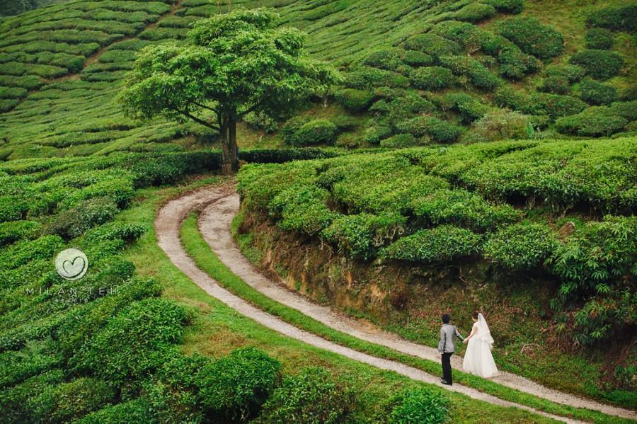 bridal prewedding photo at cameron highlands