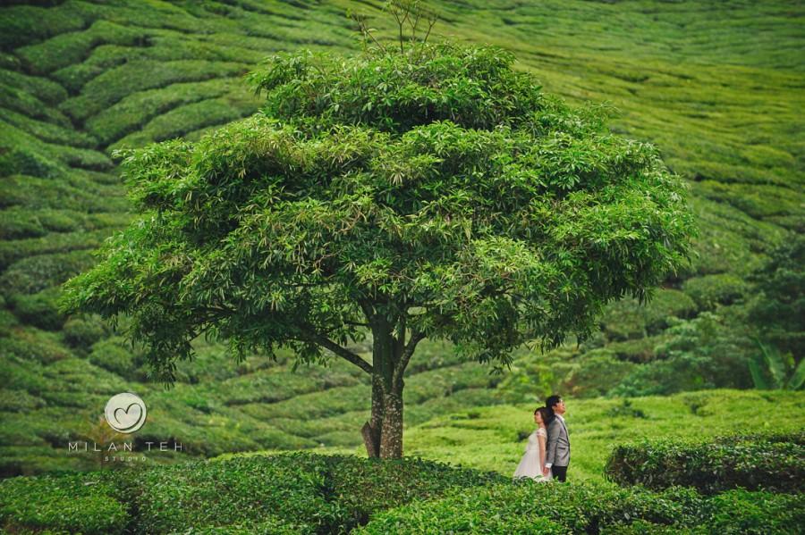 prewedding photography cameron highlands