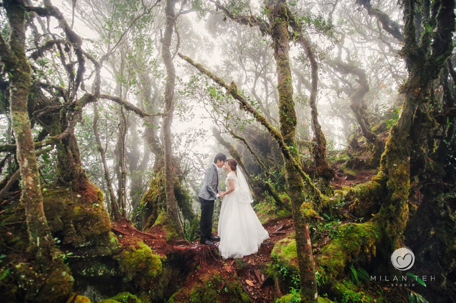 wedding photo at mossy forest cameron highlands