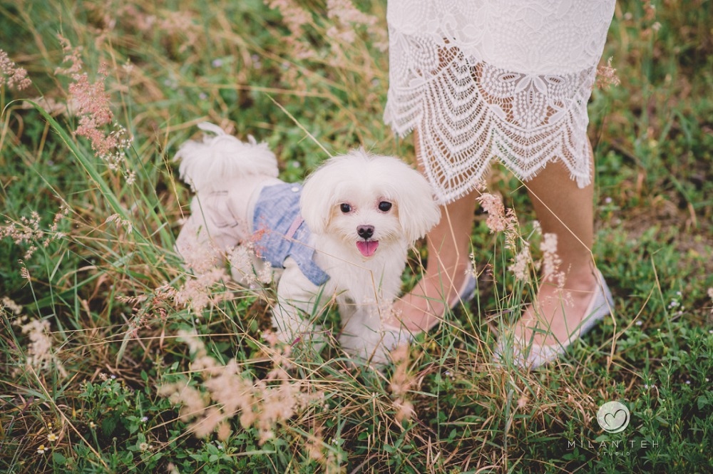 singapore prewedding in lalang field with dog