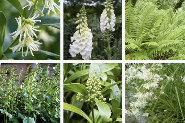 Shady Border Planting Contemporary Garden Design London