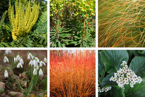 Plants for winter interest